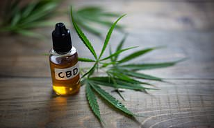 cbd oil contents